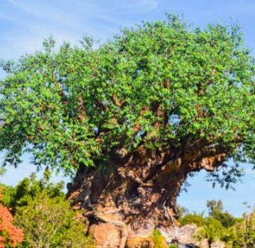 The Best Snacks in Disney - Animal Kingdom