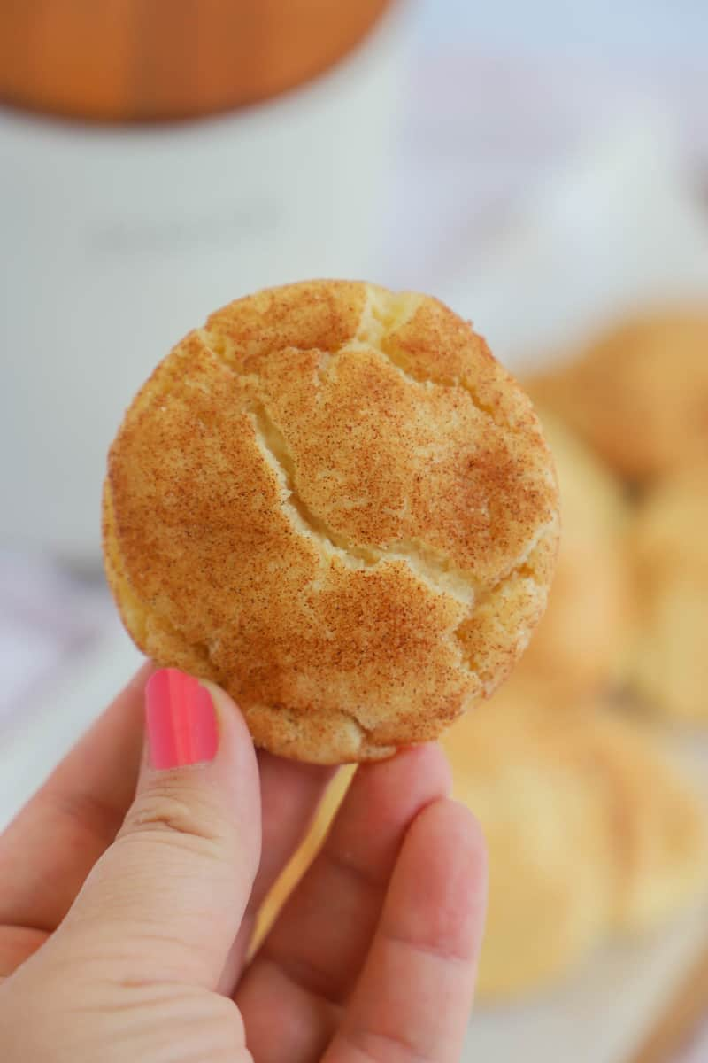snickerdoodle in hand close up